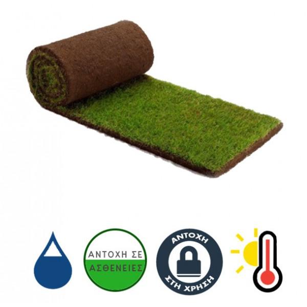 ΦΑΙΣΤΟΣ (Υβρίδιο Bermuda grass)
